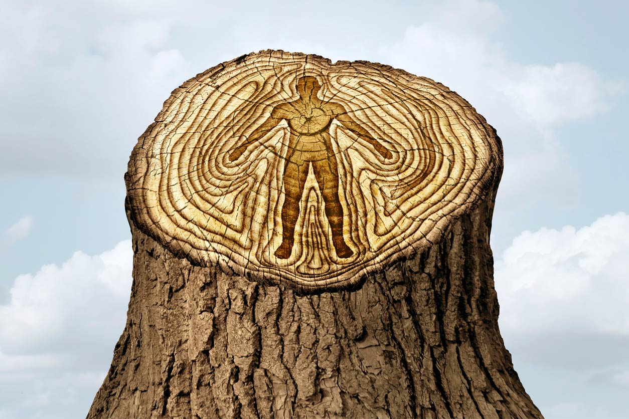 tree stump with human body in the tree rings